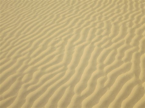 Of Sand by Camel Safaris And Sand Dunes In Jaisalmer Temporarily Lost