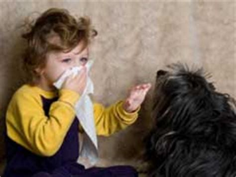 what causes puppy breath bad breath causes and remedies
