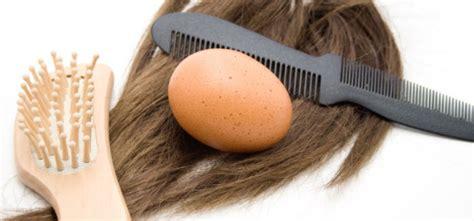 Masker Telur 30 5 Masker Buah Untuk Rambut Gudang Kesehatan