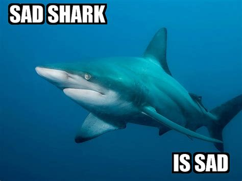 Sad Shark Meme - making the connection the oceans in contemporary american