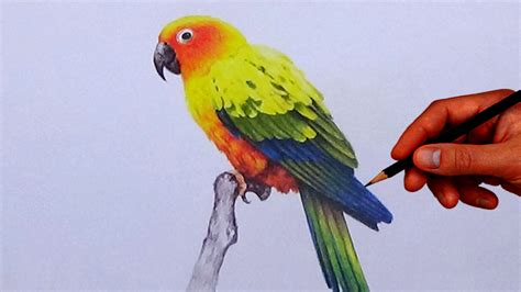 easy colorful drawings parrot drawing colorful for easy parrot draw in water