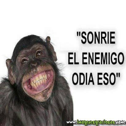 im 193 genes de monos chistosos con frases imagenes graciosas de monos imagenes chistosas