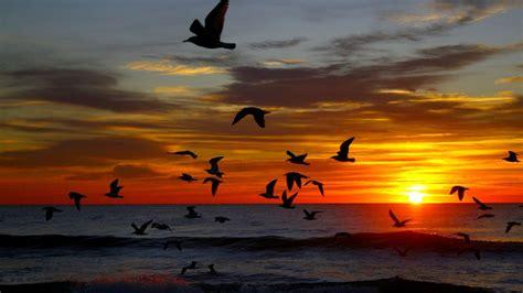 seagulls  ocean  sunset hd wallpaper background