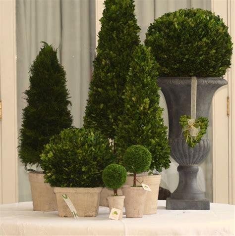 plantas de interior sin luz plantas de interior sin luz natural top cuenta con una