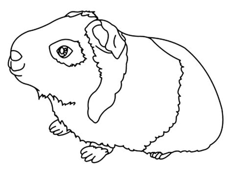 guinea pig coloring pages 187 guinea pigs coloring pages