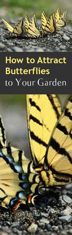 how to attract wildlife to your backyard 1000 ideas about butterfly feeder on pinterest