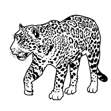 jaguar coloring pages free fact cards rain forest animals elem upper elem abcteach