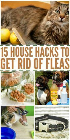 how to get rid of cats in backyard 1000 images about fleas ticks on pinterest fleas
