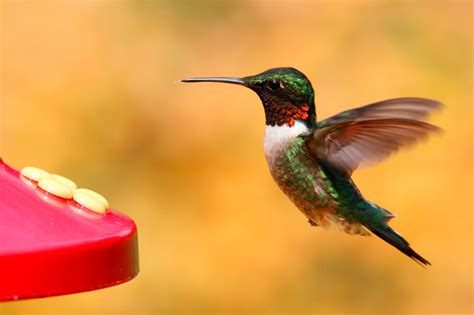 best hummingbird feeder review of four types of feeders