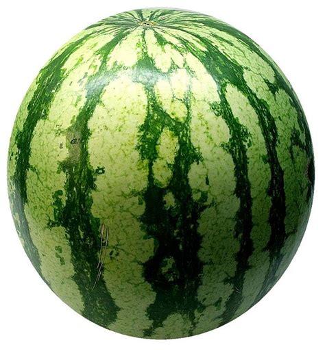 Semangka Vektor semangka melon buah 183 foto gratis di pixabay