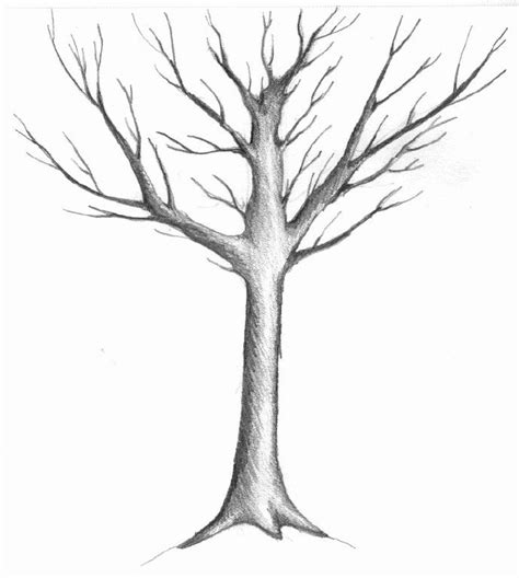 simple drawing tree trees drawings sketch of a winter tree by judith m