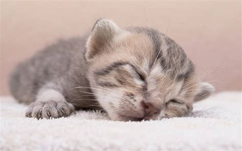 newborn kittens newborn kittens a complete guide to their care and