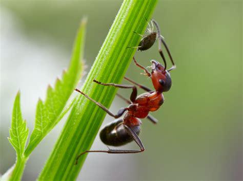 was gegen ameisen im garten was hilft gegen ameisen im garten innenr 228 ume und m 246 bel ideen