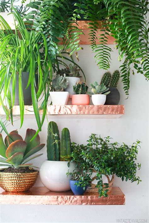 loft living room sources plants indoor plants indoor