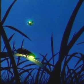 do bed bugs come out in light lightning bug drstevegreene com