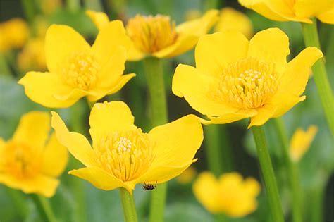 Pflanzen F R Teich 769 by Pflanzen F 252 R Den Naturnahen Gartenteich Nabu
