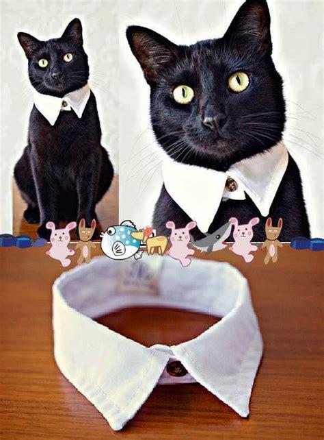 el detalle que hace la diferencia especial diy b as 25 melhores ideias de diy roupa para gato no pinterest