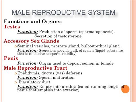 Sections Of A Library And Their Functions by Gallery Functions Of Reproductive System