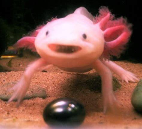 Interesting Angles by Gemstone Salamander Keepsake Petdiys Com