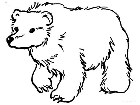 brown bear looking for food coloring pages brown bear