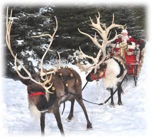 live reindeer farm reindeer to buy rent a reindeer live