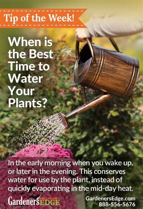 Best Time To Water Vegetable Garden 17 Best Images About Gardening Tips On Gardens
