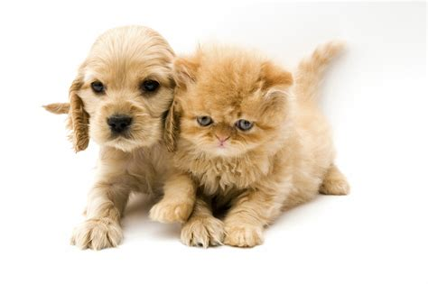 puppy and cat and wallpapers high quality free
