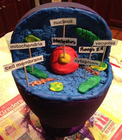 How To Make A 3d Jello Animal Cell Model
