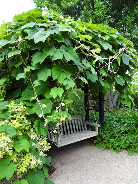 gardening on the porch pruning 17 best images about grape arbor on gardens