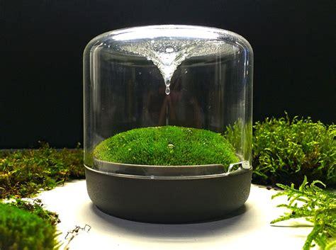 Contemporary Bedroom Design Ideas sanctuary little mossarium brings a slice of natural