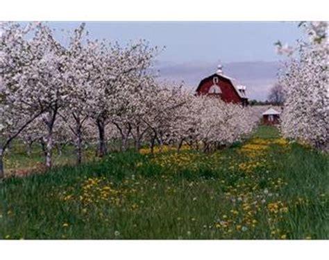 Cherry Season Door County by Cherry Season Door County