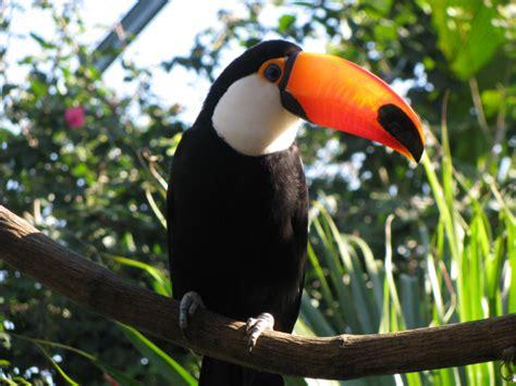imagenes de animales silvestres animales salvajes en aves related keywords animales