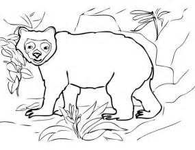 spectacled bear coloring page andean spectacled bear coloring page super coloring