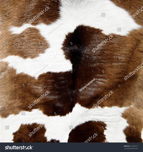 cow fur texture cow skin texture stock photo 312067217 shutterstock