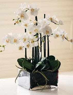orchid centerpieces for dining table best 25 potted orchid centerpiece ideas on