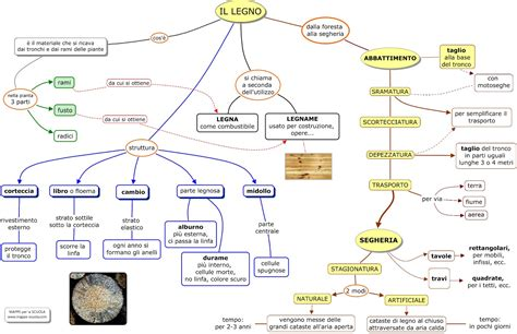 senso di bagnato prima ciclo fotosintesi clorofilliana schede per scuola primaria