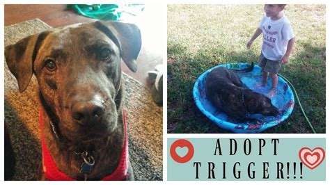 tales warming tales of rescue dogs who rescued their owners right back books rescue stories adopt adorable active trigger