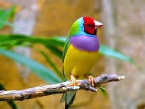 finch bird finches 12 wallpaper 2560x1920 363979 wallpaperup