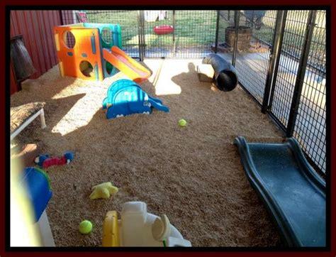 dog play area backyard southern charm labradoodles american and australian