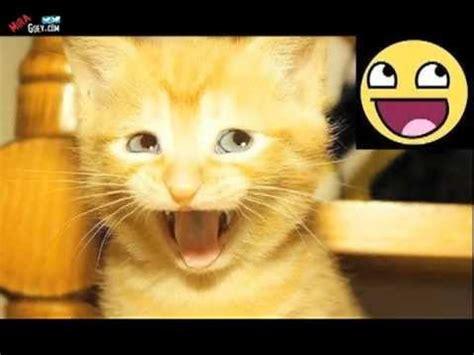 imagenes interesantes de animales animales que hacen re 237 r videos graciosos imagenes de gatos