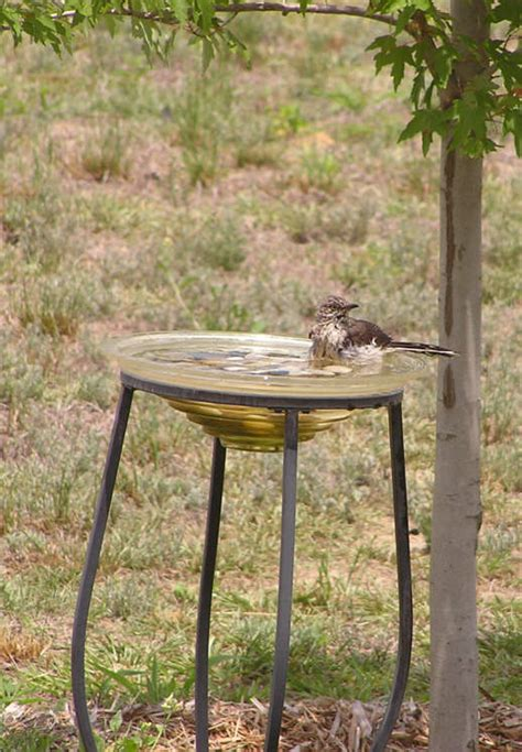 backyard bird baths birdbath definition what is