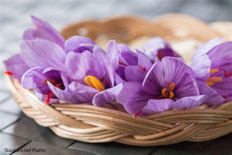 coltivare zafferano in vaso coltivare zafferano come farlo in vaso o nell orto