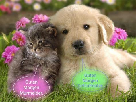 morning puppy kitten and puppy wishes morning in german k 228 tchen und hundchen wunschen guten