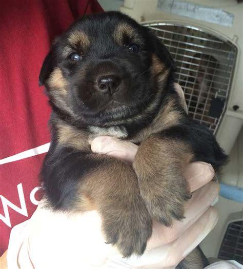 wayside waifs dogs wayside waifs rescues 12 dogs in dearborn fox4kc