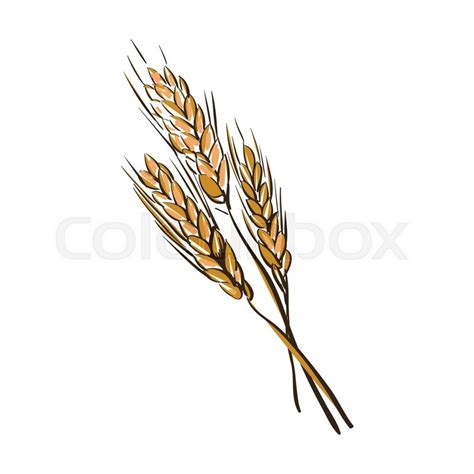 doodle god wiki wheat doodle wheat spikelets isolated on a white background