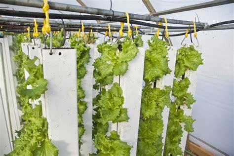 Aquaponics Vertical Garden - aquaponics vertical farming