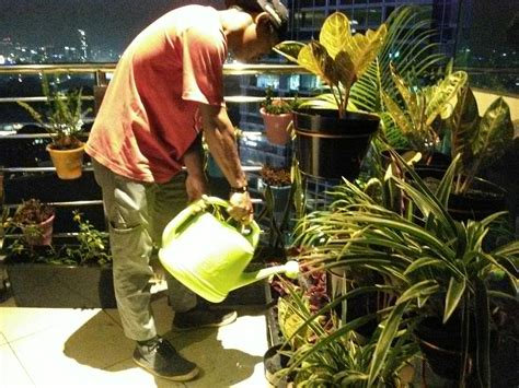 Jual Lu Hias Jakarta Timur jasa design taman kantor di jakarta tukang taman minimalis