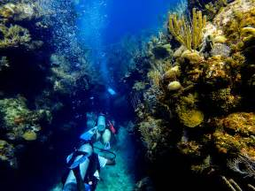 roatan dive roat 225 n and the bay islands learning to dive in paradise