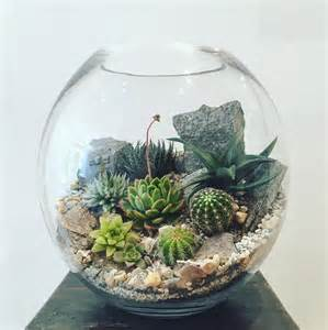 desert world terrarium extra large bioattic