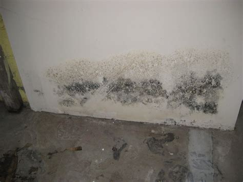 basement mold testing waukesha home inspection common insepction problems found